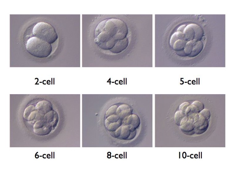 0_1530030067604_6to10cells.jpg